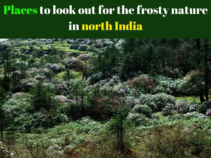 Places to look out for the frosty nature in North India
