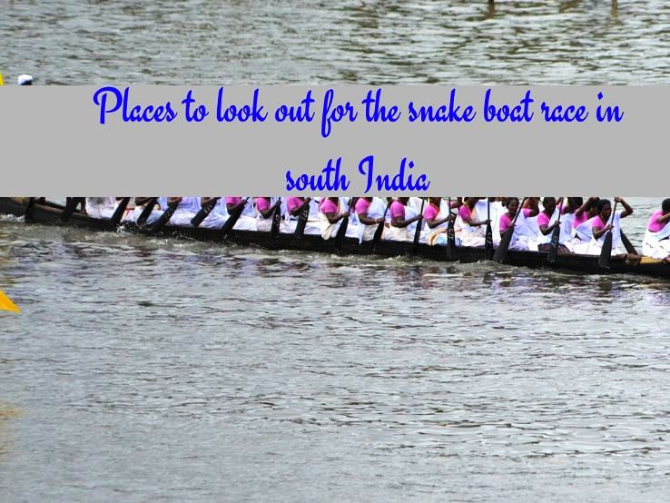 Places to look out for the snake boat race in South India