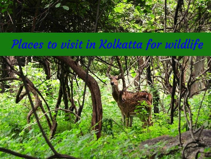 Places to visit in Kolkata for wildlife