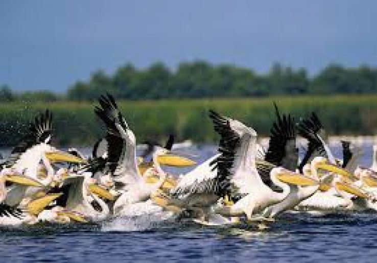 Wildlife watching in Danube Delta: Romania