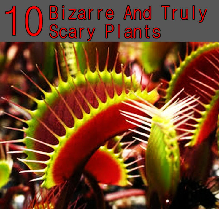 Top 10 Bizarre And Truly Scary Plants You Never Knew Existed