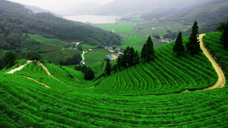The Only Munnar Tour Guide That You Need To Raid The Majestic Town