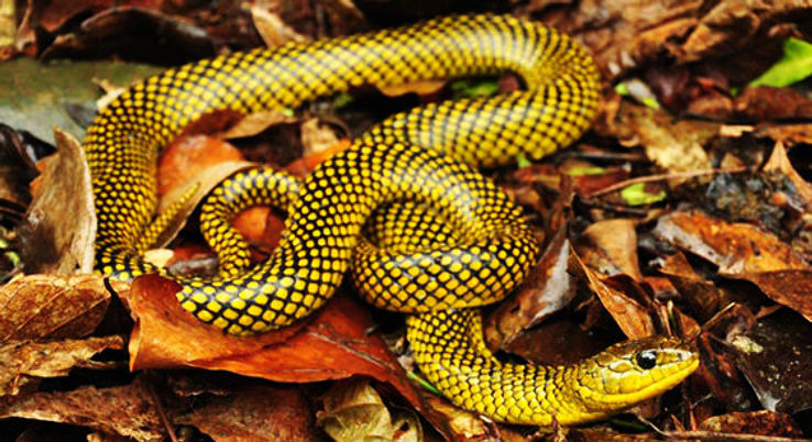Deadliest Island Of The World : Has One Snake For Every