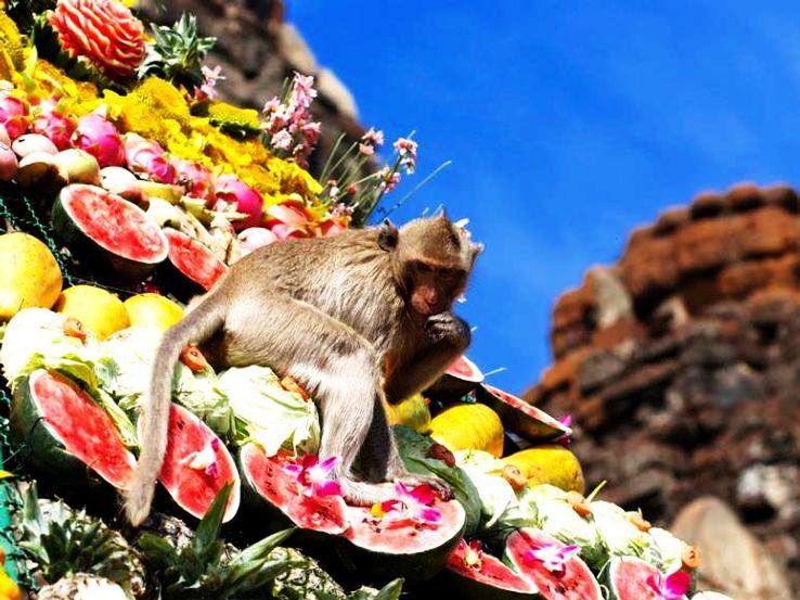 thailand-monkey-festival-3_1429533125u50.jpg
