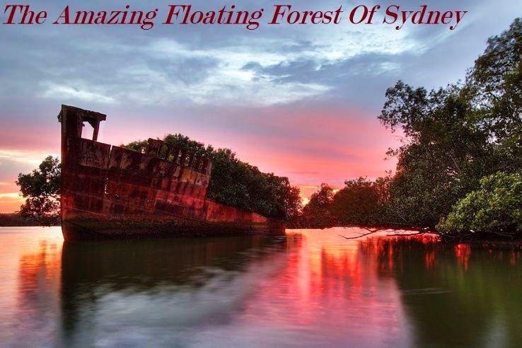 The Amazing Floating Forest Of Sydney