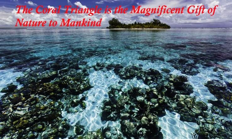 The Coral Triangle Is The Magnificent Gift Of Nature To Mankind