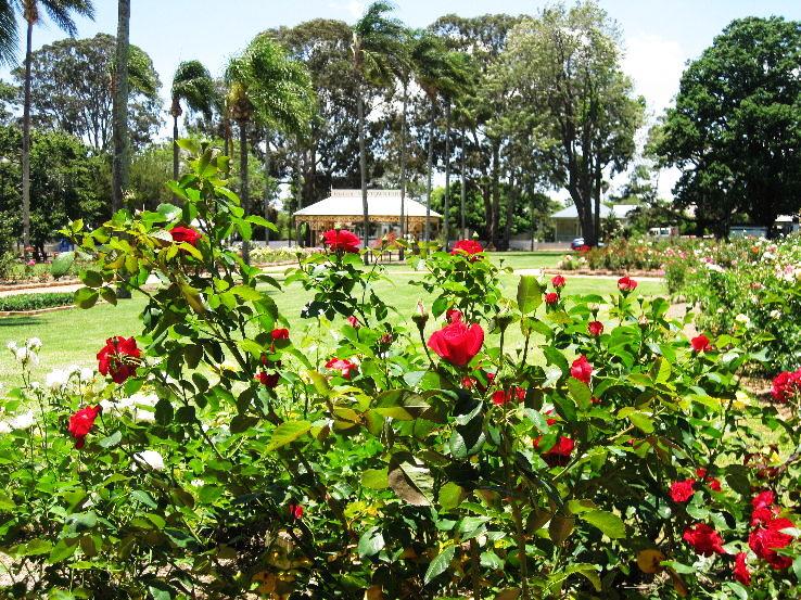 toowoomba-state-rose-garden-rosarium1_1461590015u60.JPG
