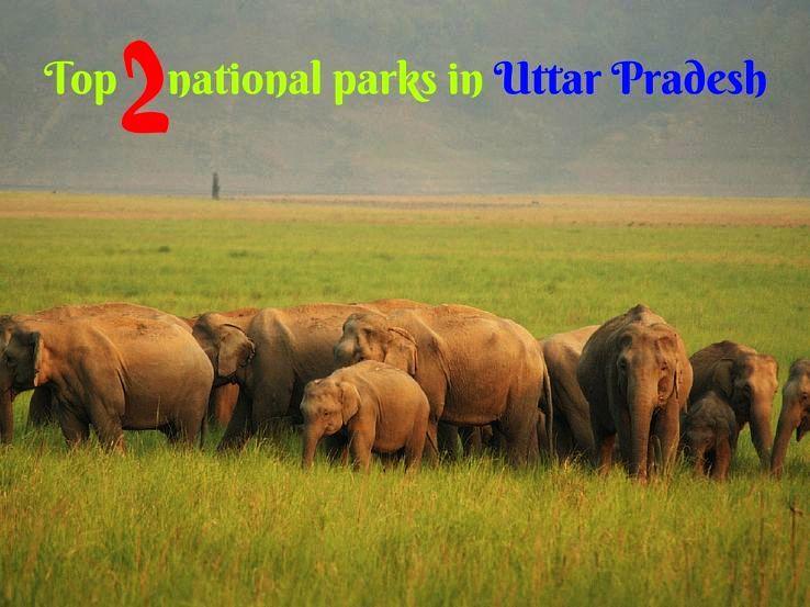 Top 2 national parks in Uttar Pradesh