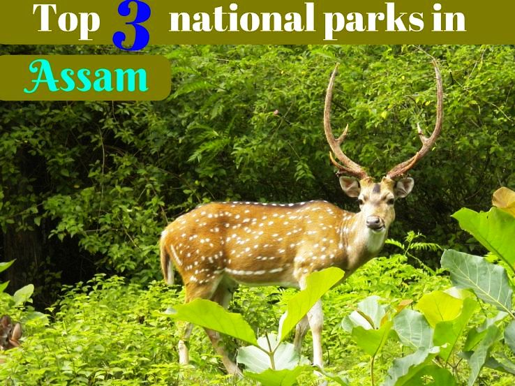 Top 3 national parks in Assam
