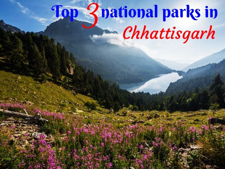 Top 3 national parks in Chhattisgarh