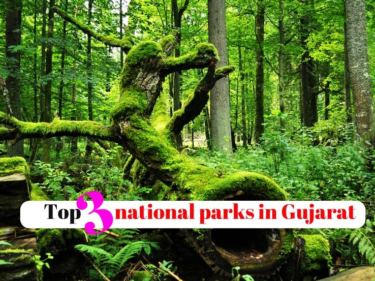Top 3 national parks in Gujarat