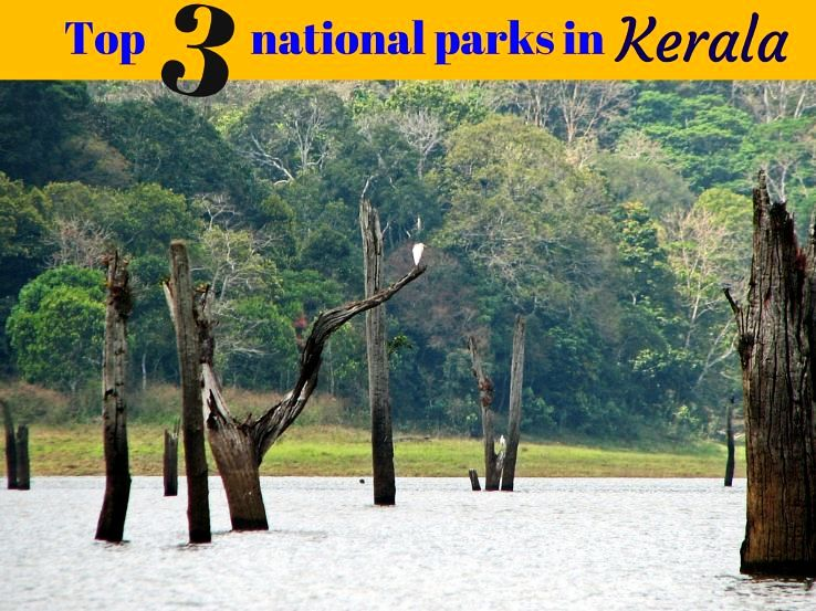 Top 3 national parks in Kerala