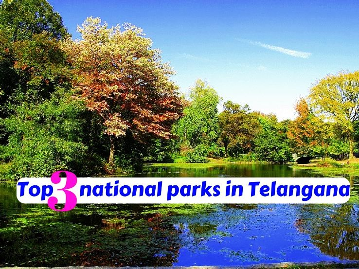 Top 3 national parks in Telangana