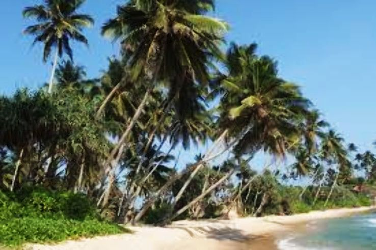 5 Famous Beaches In Sri Lanka For A Perfect Beach Vacation