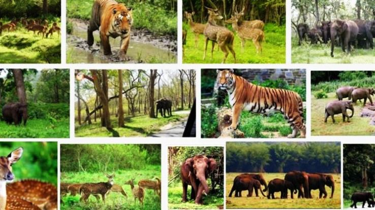5 Famous Wildlife Sanctuaries  in India