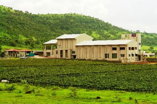 Must Visit Vineyards to Enjoy the Best Wine in India