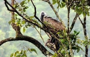 Bird Watching In Ramnagara