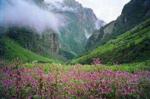 Hike The Japfu Peak
