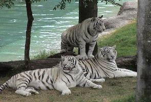 Balukhand Konark Wildlife Sanctuary