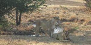 Sasan-Gir National Park