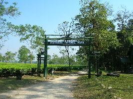 The Gorumara National Park