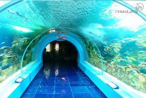 Fakieh Aquarium