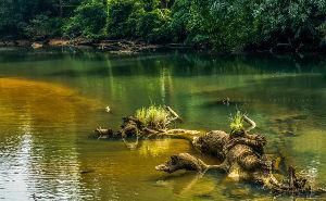 Kalakkad Wildlife Sanctuary