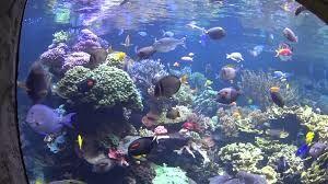Aquarium And Exhibition Center