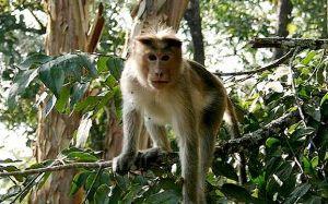 Nagarjunasagar Wildlife Sanctuary