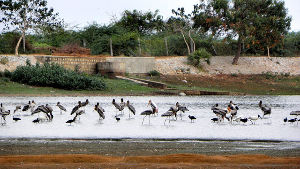 Kunthankulam Bird Sanctuary