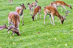 Kanchula Korak Musk Deer Sanctuary