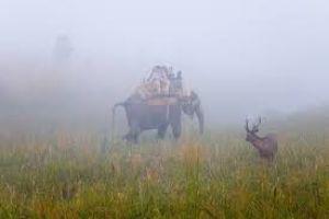 Bijrani Zone Corbett National Park