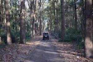 Corbett National Park Jeep Safari