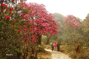 Barsey Rhododendron Sanctuary