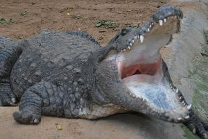 Amaravathi Crocodile Farm