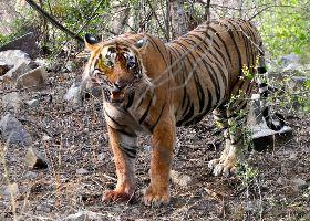 Ranthambhore National Park And Tiger Reserve