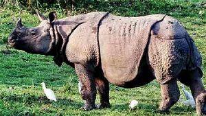 Kaziranga National Park- Your Adventurous Journey Begins