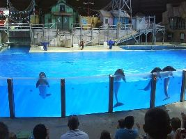 Belgiums Answer To Seaworld