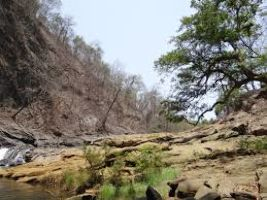 The Dandeli Adventure Jungle