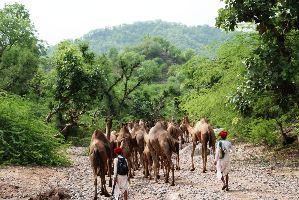 Kumbhalarg Wildlife Sanctuary