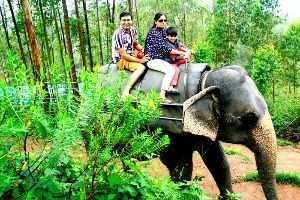 Take An Elephant Safari In Munnar