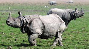 Bura-Chapori Wildlife Sanctuary