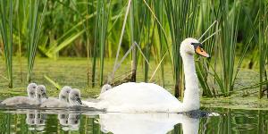 Sajnekhali Bird Sanctuary