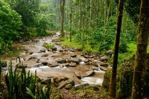 Homestay With Private Waterfall In Chikmagalur