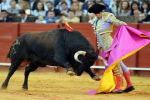 View Bull Fighting