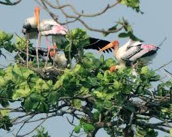 Bird Watching In Kumarakom