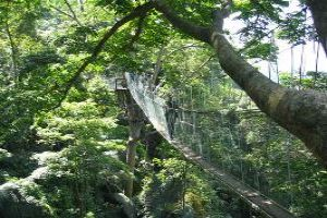 Canopy Walking: A Different Kind Of Thrill