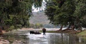 Galibore Fishing Camp