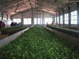 Doddabetta Tea Factory