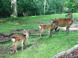 Alisagar Deer Park